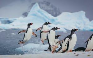 Antarktis Reisen -sehenswerte Fauna, die man gesehen haben sollte